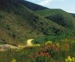 Outeniqua Nature Reserve