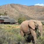 Aquila Private Game Reserve - 2 hours from Cape Town