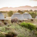 Kwena Lodge Ellies