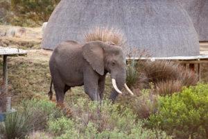 Kwena Lodge Ellies_DSC8943