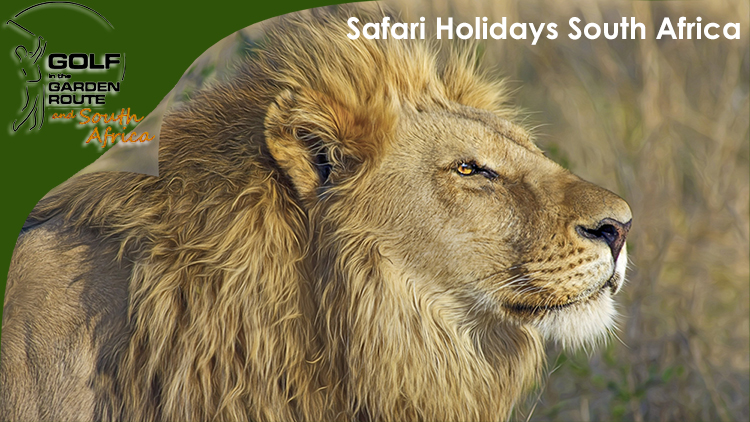 Safari Holidays South Africa - Golf in the Garden Route & South Africa