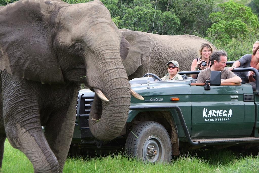 Kariega Game Reserve Eastern Cape